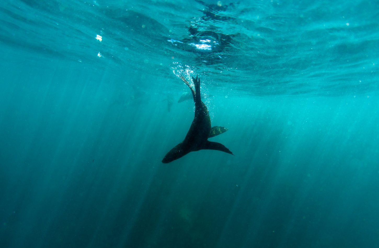 snorkelling-with-seals-saffa-tours-cape-town