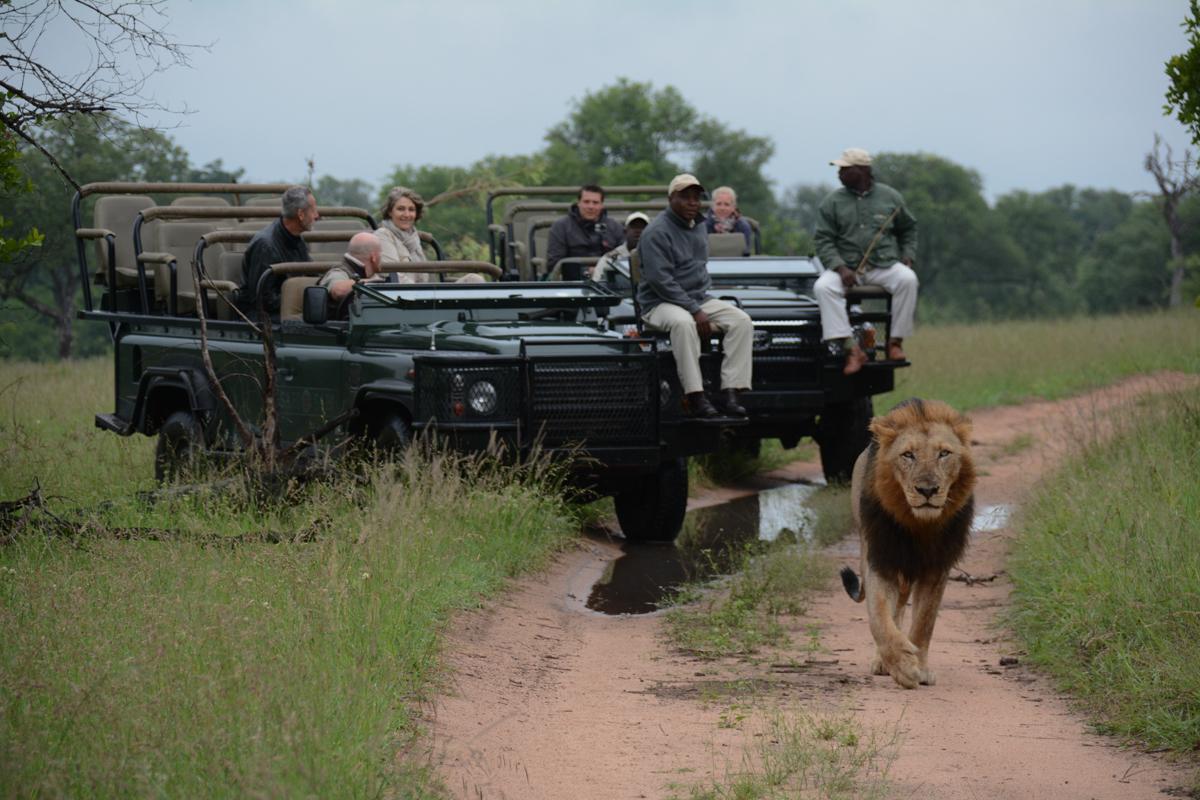 safari-drive