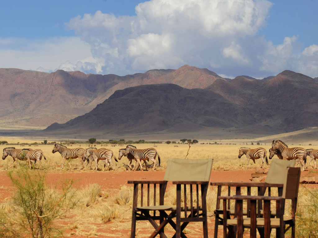 zebra-namibia